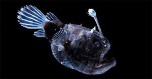 El pez abisal